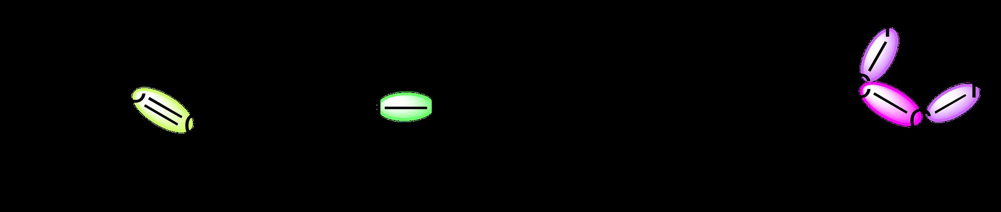 un proceso metabólico
