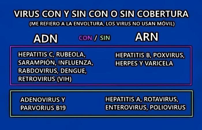qué tipos de virus hay