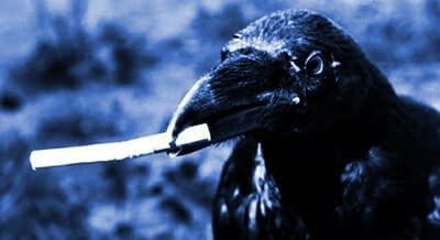 cuervo fumando